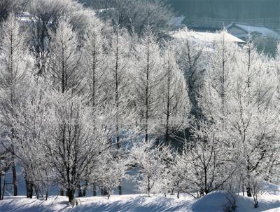 厳冬の霧氷