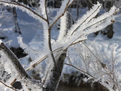 厳冬の霧氷2
