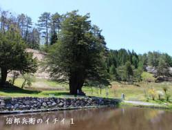 樹齢2000年治郎兵衛のイチイ(1)